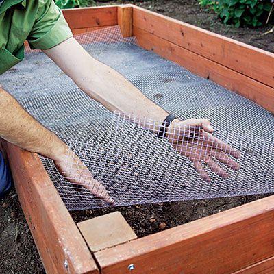 uprawa warzyw w skrzyniach to walka z kretami - ułóż siatkę na dole